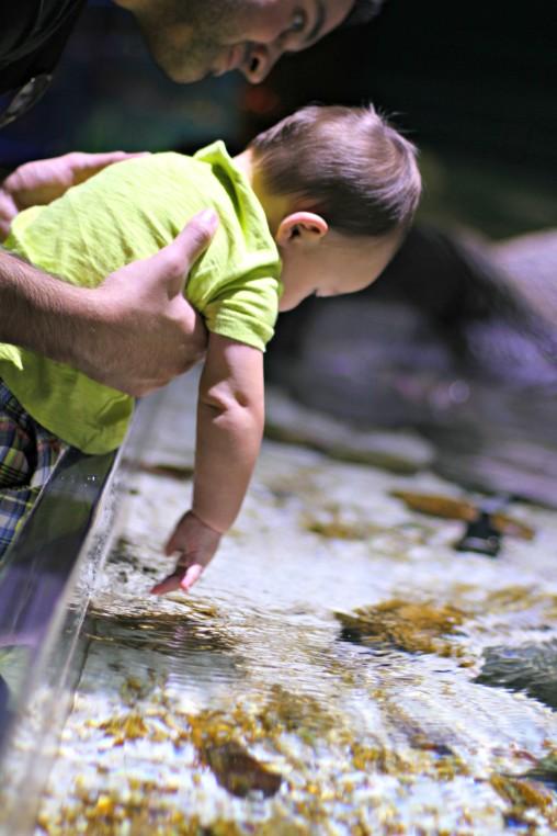 SEA LIFE Aquarium Charlotte-Concord