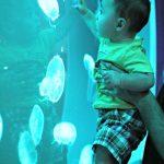Joaquín's First Trip To An Aquarium (Part 2)