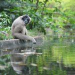Visit Ulu Temburong National Park
