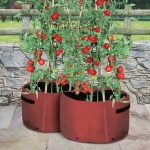 Tips to Help You Get the Most from Your Tomato Planters