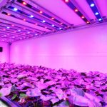 All You Need to Know about LED Grow Lights