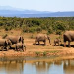 Amazing Adventures You Will Experience On A Trekking Tour To Africa