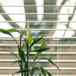 The Different Types of Window Blinds in the Market Today