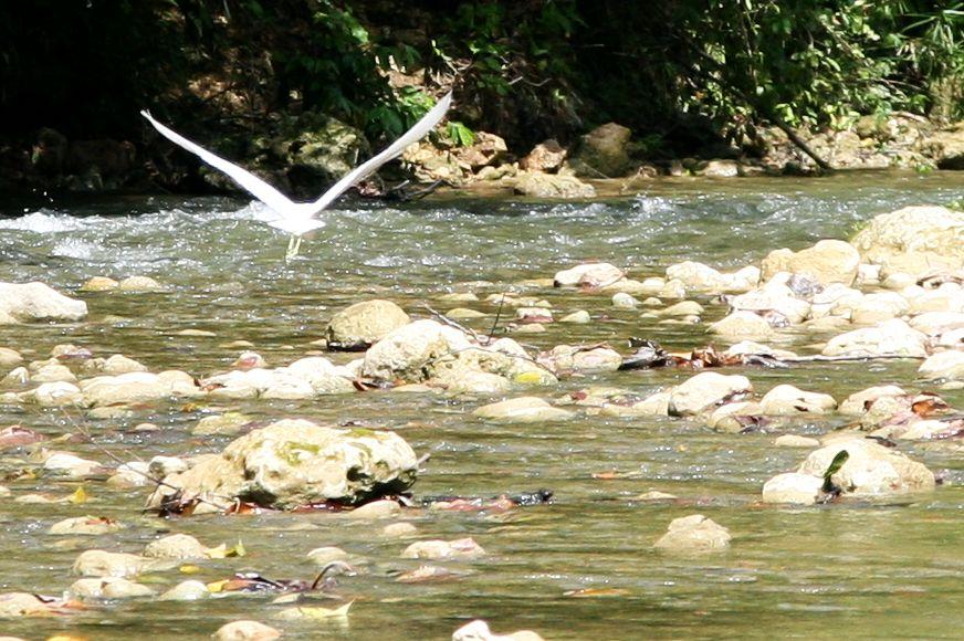 Rancho Veragua