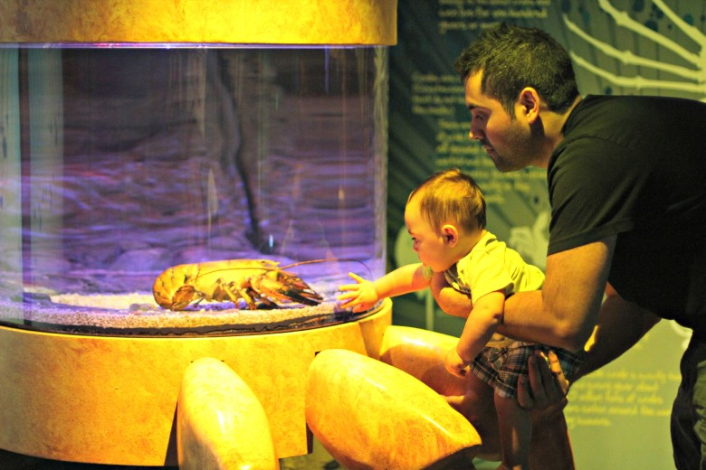 SEA LIFE Aquarium Charlotte-Concord