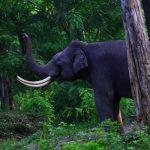 Start Planning An Epic Wildlife Vacation
