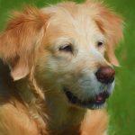 Grieve Your Departed Pet With Original Art