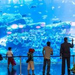 Seven Best Things To Do In Dubai