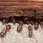 Safety Measures to Take When Dealing With Pest Infestation