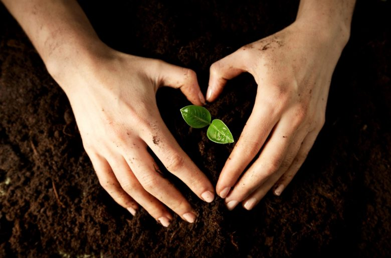 Hands With Plant