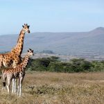 Get Habituated with the Basic Rules and Norms for Wildlife Travel
