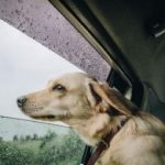 Eight Smart Tips For Traveling With Dogs