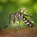 Organic Mosquito Control Methods For Gardeners