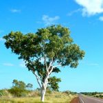 Choose Aussie Tree Care for Tree Removal and Pruning Services