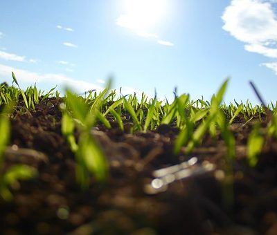 grass-in-spring
