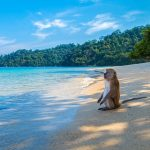 Six Best Islands To Visit In Thailand For Every Traveler