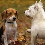 How to Keep Your Pets from Harmful Pests