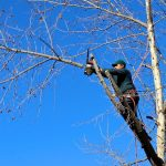 The significance of different types of tree pruning services