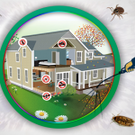 How Can I Control Pest In My House?