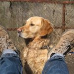 Traveling With Your Pooch: The Ultimate Dog Vacay Guide