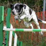 How to decide if your dog is fit for dog agility training?