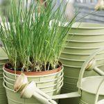 Best Online Plant Nursery