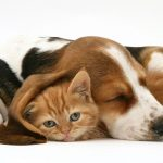 Tips For Choosing The Right Form And Dosage Of CBD Oil For Pets