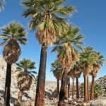 Top Reasons For Palm Tree Removal