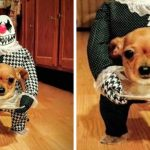 Bored at Home? Dress Up Your Dog for Halloween!