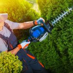Should You Buy A String Trimmer vs an Edger?