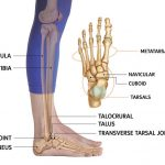 Know About AnkleJoint Injury