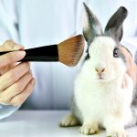 "What is ""Cruelty-free"" Makeup and Why Should I Buy it?"