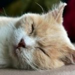 What should we do if your cat has dry skin?