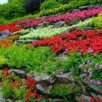 How to Grow an Indoor Garden in Your Paying Guest in Delhi