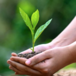 Tips for living a sustainable lifestyle