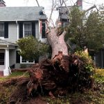 Why Is It Necessary To Remove Dead And Dying Trees From Your Property?