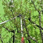 5 Reasons Why You Need to Hire a Tree Removal Service