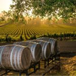 Enjoying The Pleasures Of Upper End Wine Tours in Kelowna