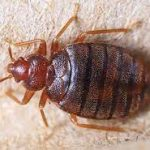 Warning Signs That You Have Bed Bugs