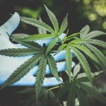 Why Is Marijuana Consumption Becoming Popular Today?