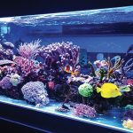 What Are the Easiest Marine Fish to Keep?