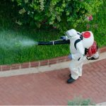 Ten Reasons To Call A Pest Control Company